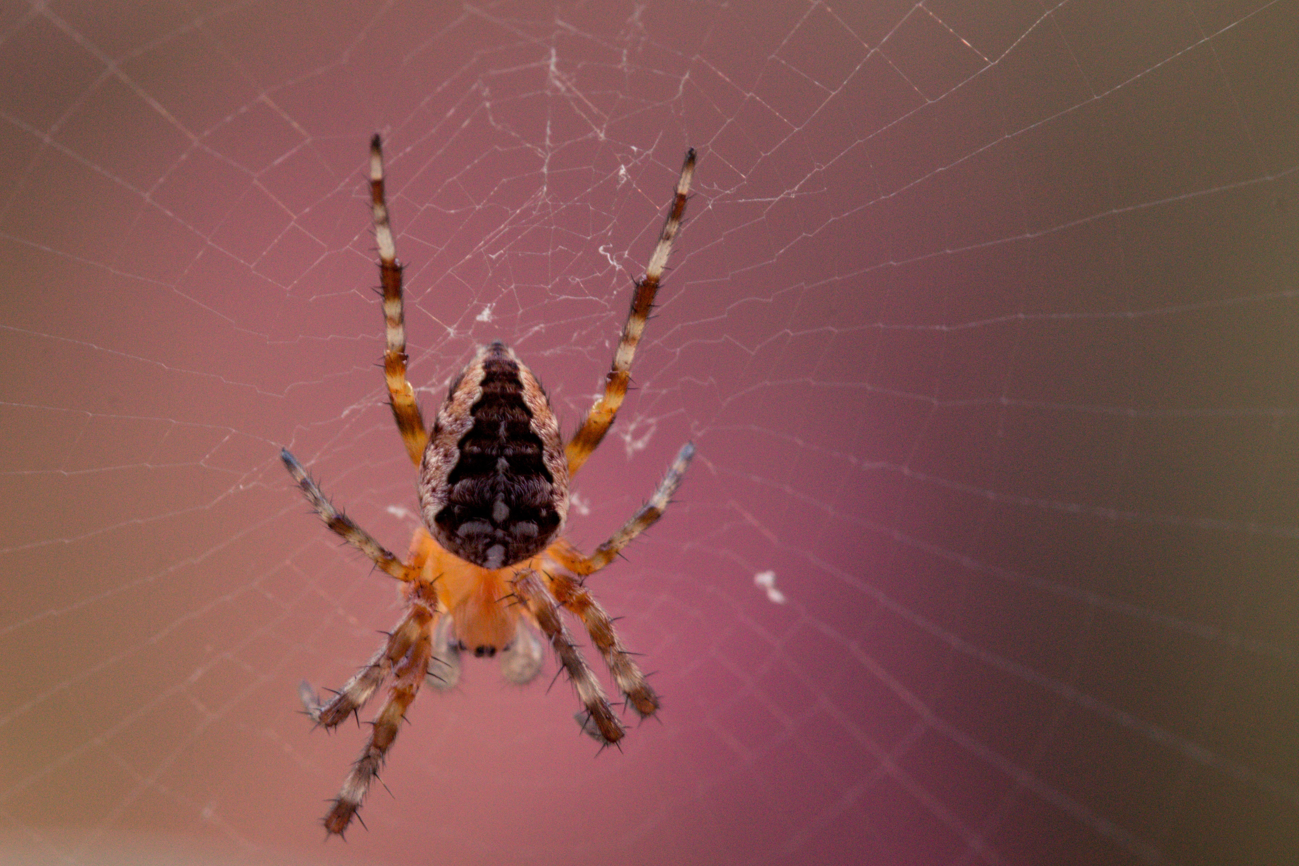 spiders, fears, phobias, hypnotherapy